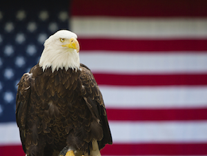 USA_flag_eagle