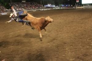 bull-riding-2016